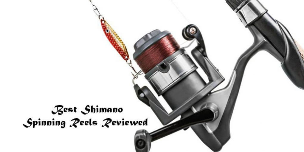 b092fa718d1 The Best Shimano Spinning Reels 2019 – Latest Updated List
