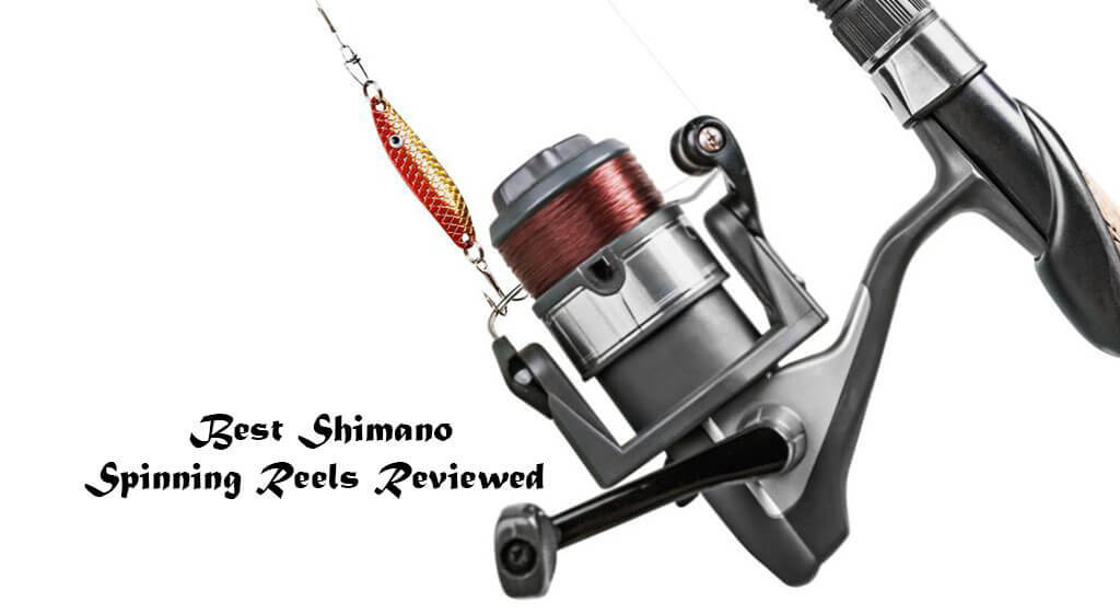 Best Shimano Spinning Reels