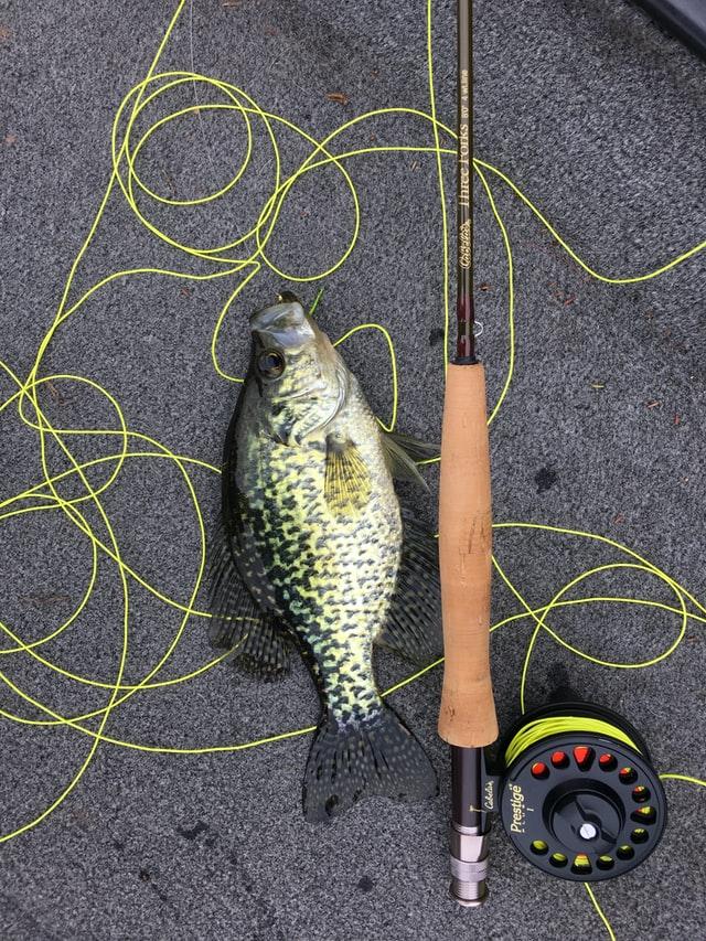 Crappie Fish Caught