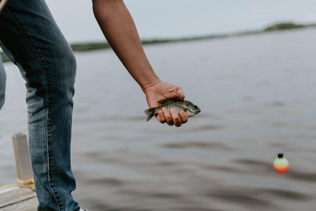 person holding bluegill