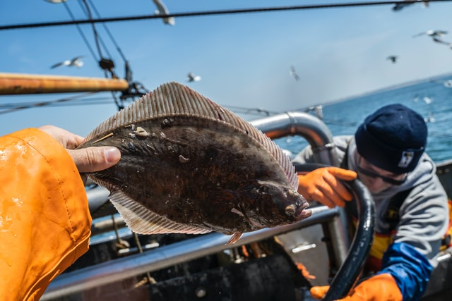 Person Holding Flounder