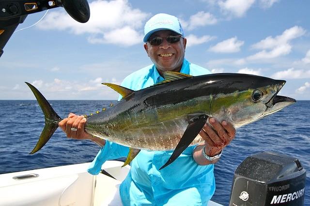 Yellowfin Tuna Identification