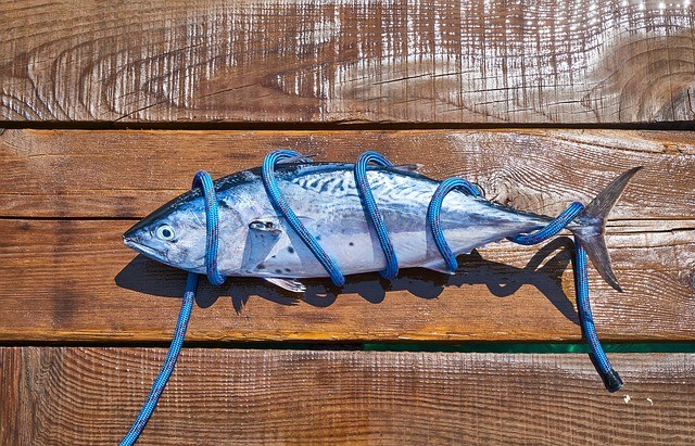 Bluefin Tuna Identification